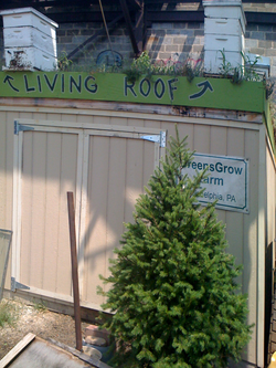 GreensGrow Farm living roof